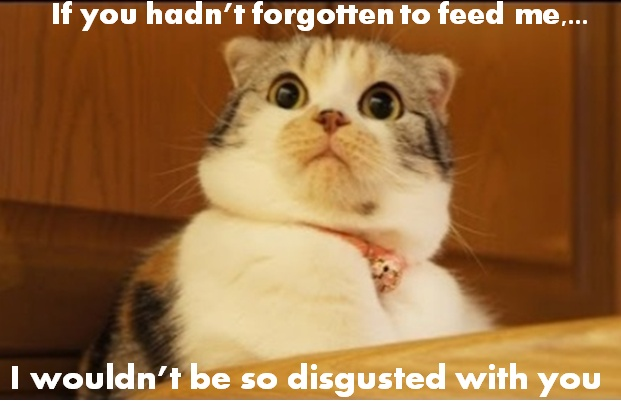 disgusted-cat